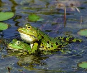 I messaggi di Vasco - frog