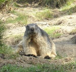 Marmotta rd