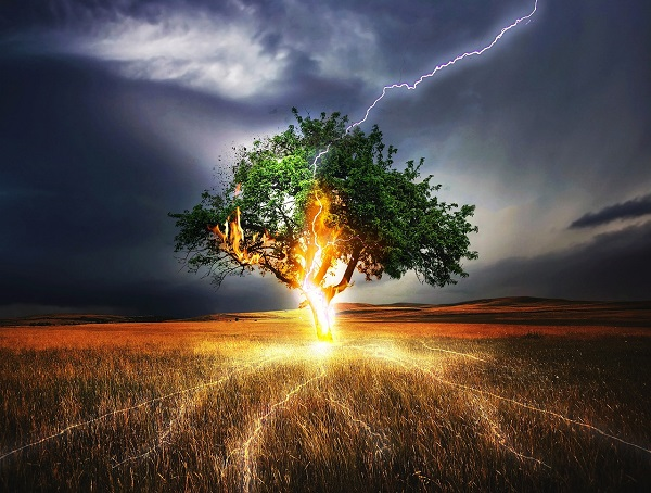 fulmine su albero_600