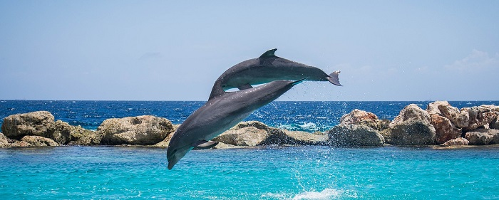Salto quantico_salto delfini 700