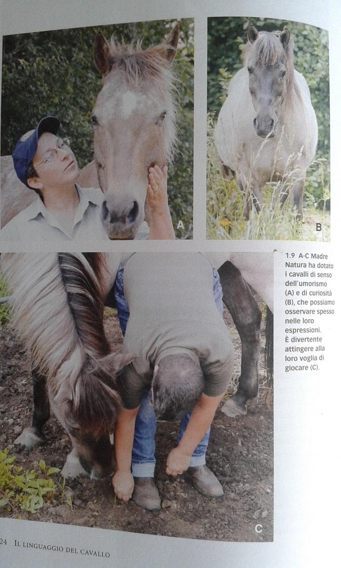 Il linguaggio del cavallo illustrazioni interne